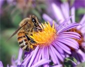 Picture: Flower & Bee