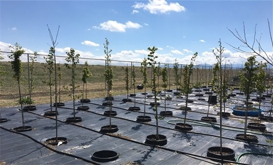 Picture: Tree Nursery