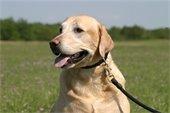 Image: Dog on Leash