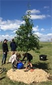 Arbor Day planting trees image