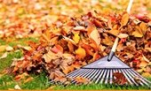 Fall Clean-up image