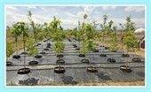 Tree Rebate Program