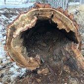 Jasper Tree Removal