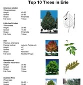 Tree Board