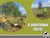 21 Trees
