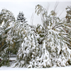 tree-damaged-by-fall-snow-storm